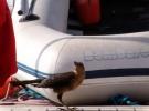030) Ptaki lubią naszą WYSPĘ