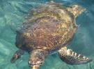 002) Jest tu Oceanarium z rybami, gadami