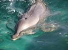 003) a przede wszystkim ssakami wodnymi