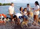 007) Psy też chciały nam złożyć wizytę