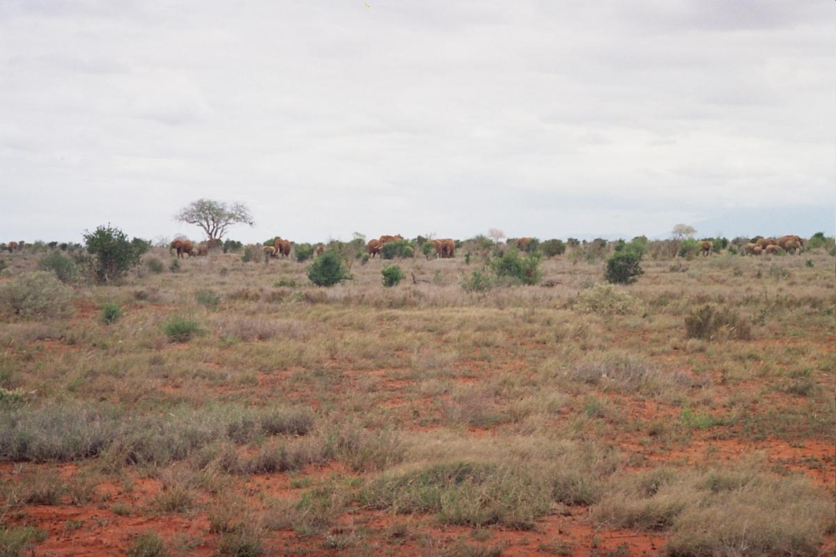 Słoniki! - krzyczała Nel w Kenii