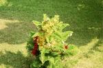 Nasze drzewko wigilijne w tropiku