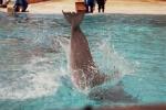 Miłość do delfinów