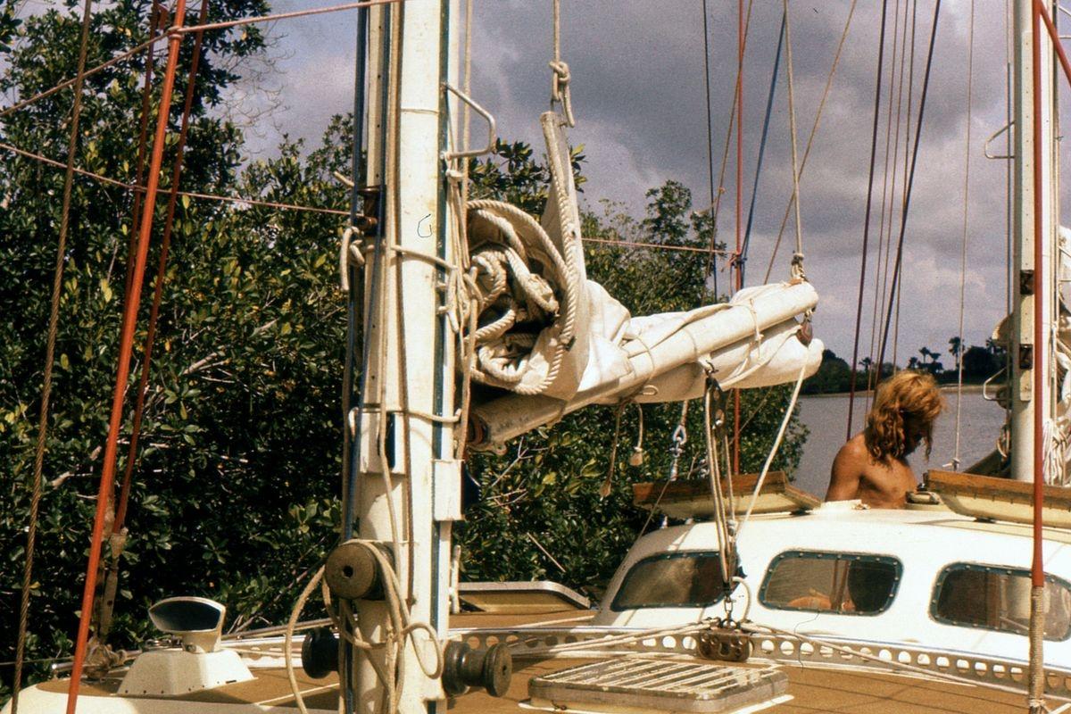 Przywiązani do mangrowi, w oczekiwaniu zmiany prądu