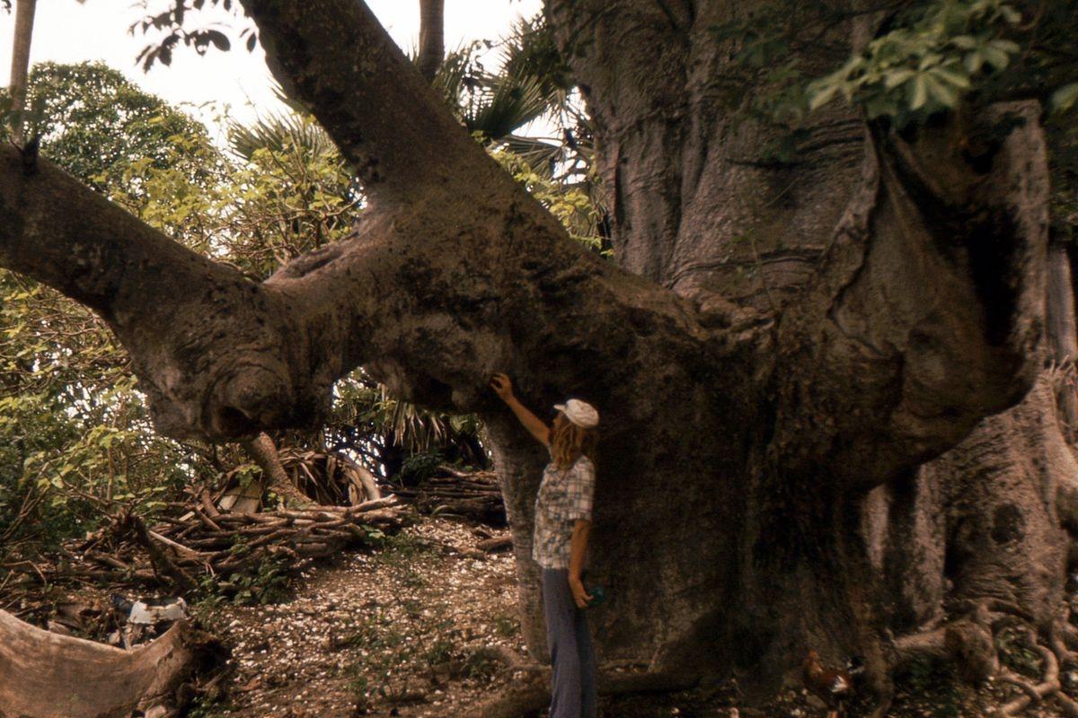 Olbrzymi baobab