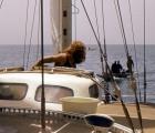 Na Morzu spotykamy często łodzie rybackie
