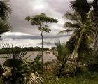 WYSPA wśród palm