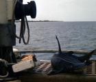 My również łowiliśmy