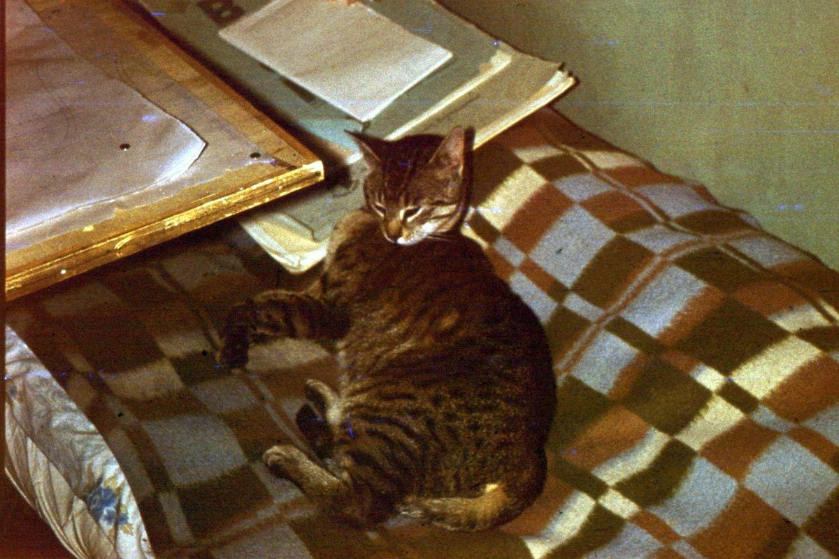 ... i pospać, jak kotka zwana Myszką pozwoliła