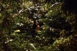 I gdzie Cię tam niesie do tej dżungli?