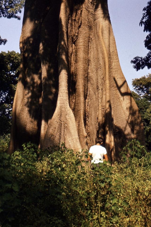 Rozmawia z drzewem, czy je olewa?