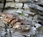 032) Skamieniałe drzewa