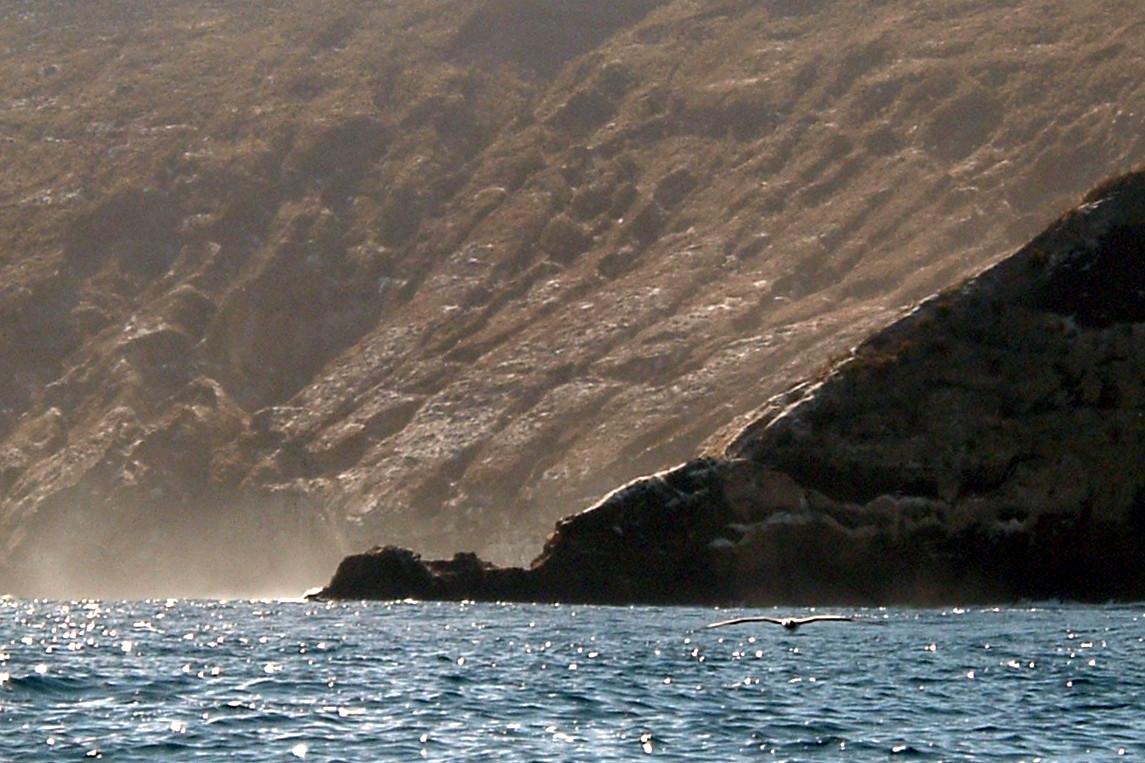 011) Aby tu zamieszkać najlepiej być albatrosem
