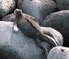 005) Legwan wygrzewający swe prahistoryczne kości