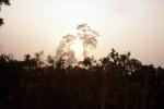 Mgła harmatanowa przed zachodem Słońca