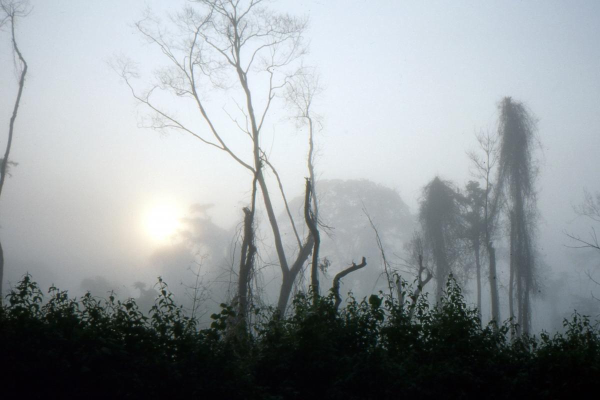 Mgła harmatanowa po wschodzie Słońca