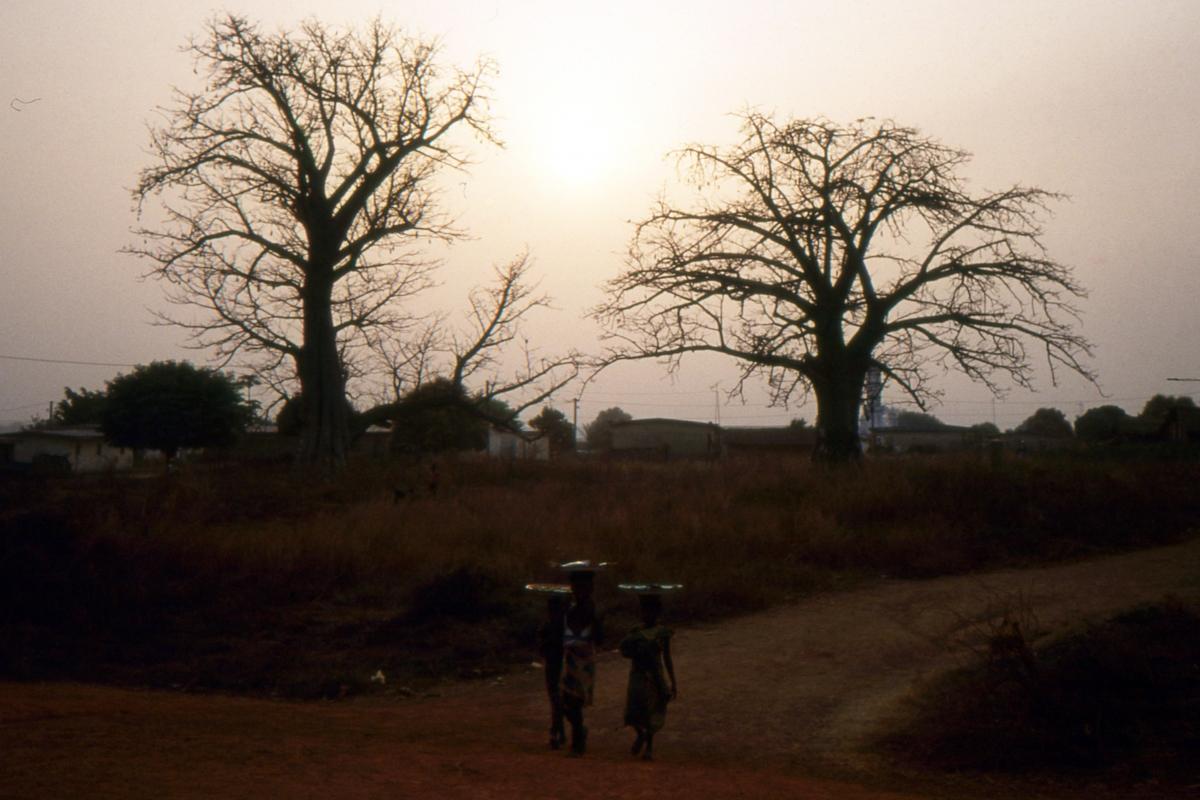 Baobaby górują nad wioskami
