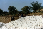 Śnieg sahelu - bawełna