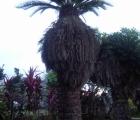 017) Lubie oglądać piękne palmy