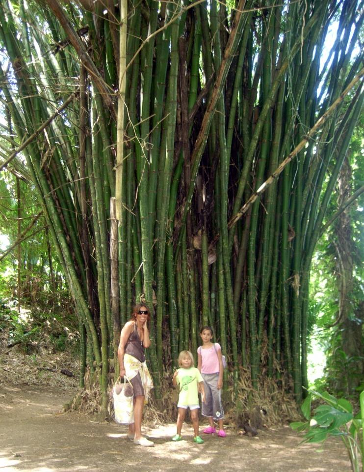 008) W bambusowym gaju