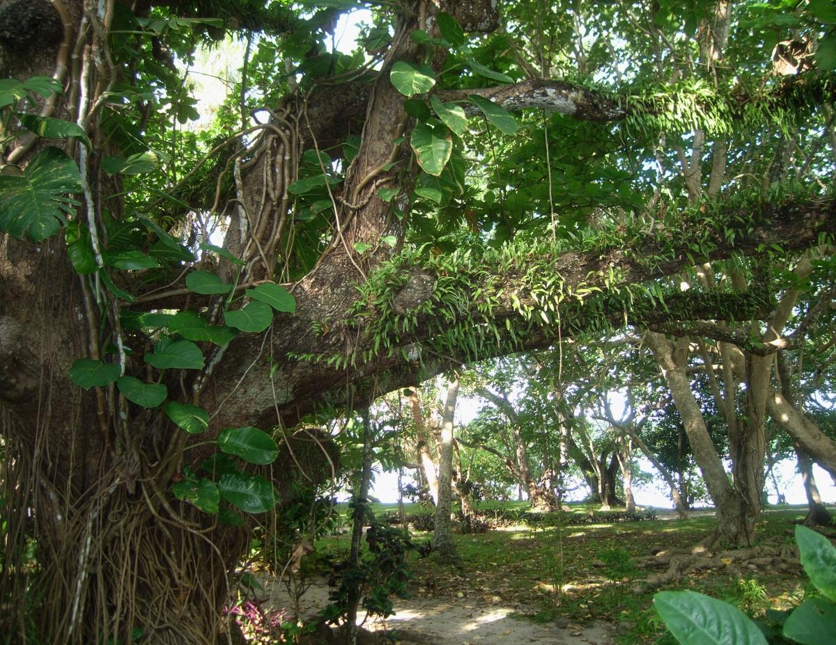 027) symbiozę wśród roślin,