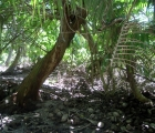 036) Kokos na kokosie